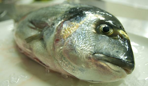 Orata nel ristorante di pesce a lecce
