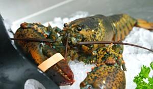 pesce-fresco-ristorante-lecce